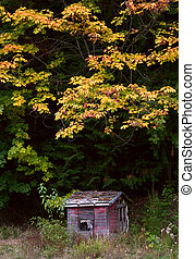 Little Red Shack in Mountains in Autumn
