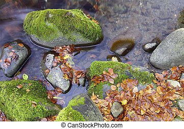 Fall Pyrenees - Small autumn leaves in a stream in the...