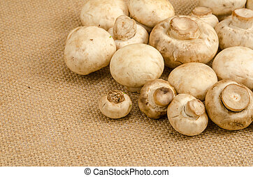 Mushroom - Image of mushroom on brown sack background