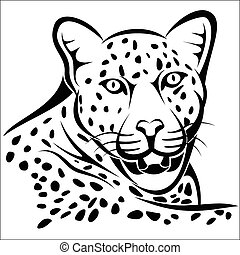 Leopard - Vector illustration : Leopard on a white...