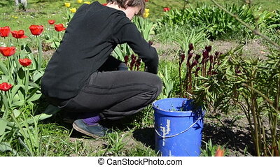 gardener weed flowers - Young gardener woman work weed...