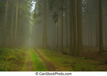 forest in fog 21