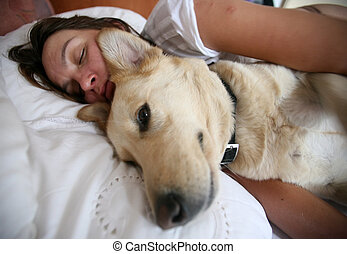 woman and dog and bed - Golden labrador sleeping next to...