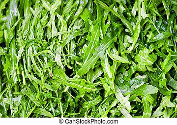 Rucola - Bunch of organic green rucola salad at market