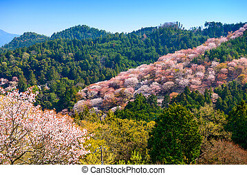 Yoshinoyama, Nara, Japan landscape in the spring.