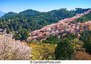 Yoshinoyama, Nara, Japan landscape in the spring.