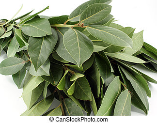 bay leaf - bunch of bay leaf against white background