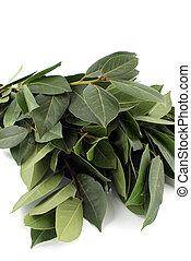 bay leaf - bunch of bay leaf against white background