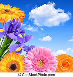 Spring flowers on blue sky
