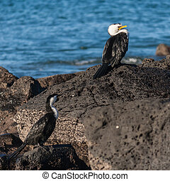 cormorants resting on rocks