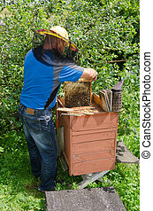 Taking out a Frame - An apiarist taking out a honey frame...