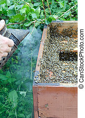 Working Apiarist - An apiarist spraying smoke into a beehive
