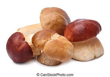 Cep mushrooms (Boletus edulis) on white background