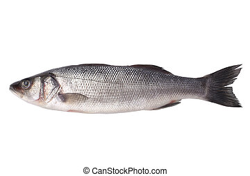 Fresh seabass isolated on white background