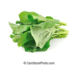 Chinese kale vegetable