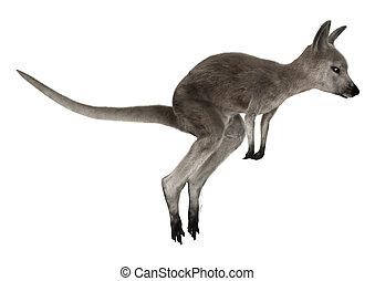 Joey - 3D digital render of a running grey baby kangaroo...