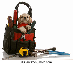 american cocker spaniel puppy sitting in tool pouch