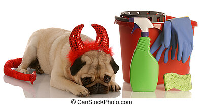 bad dog - pug dressed as devil laying beside cleaning...