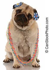 female dog - fawn pug wearing female jewellery