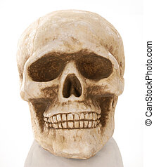 cráneo, Esqueleto, reflexión, aislado, blanco,...