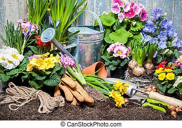 Flower garden - Gardener planting spring flower