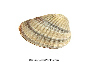 Sea Shell Isolated On White background multicolored