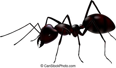 vector ant - a close up view of a vector ant isolated on...