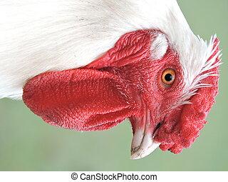 a head of a cock - a cock