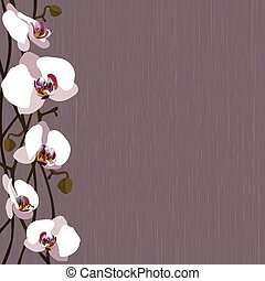 Purple background with white orchid flowers, stems and buds
