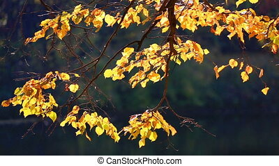 Tree branch with bright yellow autumn foliage