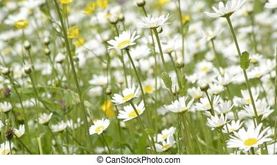 Marguerites with teddy on a swing - teddy on a wing in a...
