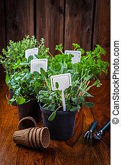piantatura, erbe