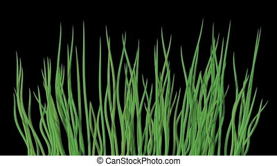 Waving water grass seamless loop
