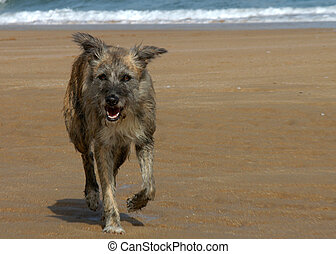 Dog on the beach on the north coast in Spain