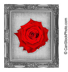 red rose on gray frame with empty grunge linen canvas...