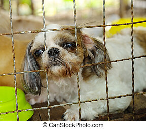 closeup of a dog cage