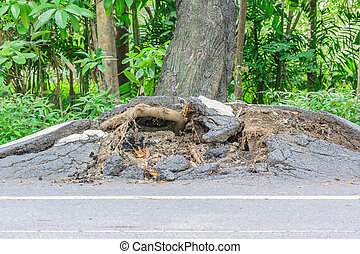 fallen tree damaged on road by natural wind storm