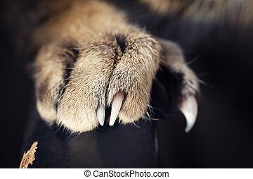 macro, gato, patas, garras