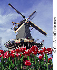 Dutch tipical view of mill and tuli