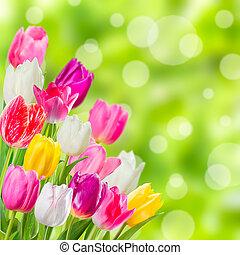 primavera, fundo,