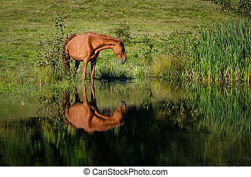 Horse at the watering place - Horse at the watering a small...