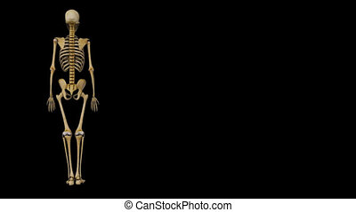 Humerus is a long bone in the arm or forelimb that runs from...