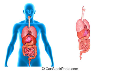 Body with organs