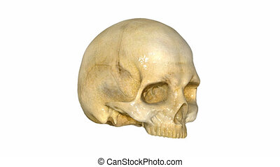 Skull is a collection of sciencepics