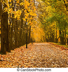 Autumn colors - Walkway in autumn park