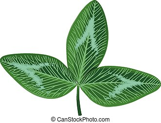 Clovers leaf trefoil - Vector illustrations of St Patricks...