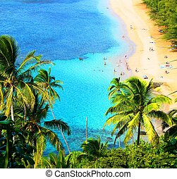 hawaiian beach - typical hawaiian beach