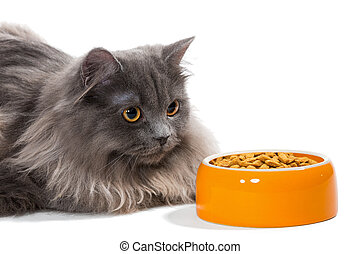 Persian cat sitting near the bowl food - Persian cat sitting...
