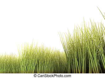 Long Grass - Long grass isolated on the white background. 3D...