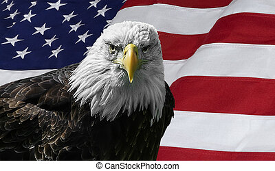 American Bald Eagle on Flag - Photo of a majestic Bald Eagle...